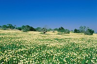 Spring meadow near Albufeira city, Algarve, Portugal, Europe