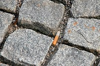 Pavement with cigarette stub