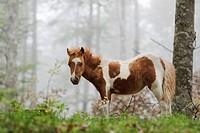 Horse, Sierra de Aralar, Navarra, Spain
