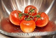 Tomatoes being washed in a colander