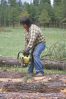 A logger cutting a felled log with a chainsaw