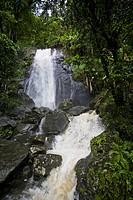 The La Coca Falls flow through a dense tropical rainforest.