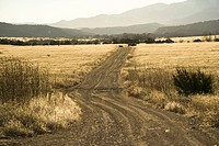 Dirt road through New Mexico countryside with back_lit dry grass