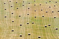 Haystacks bale aligned in field