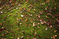 Autumn leaves and moss on ground.