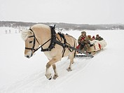 A horse pulling a sleigh full of people through the snow
