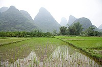 China, guangxi province, yangshuo, rice fields and karst landscape