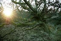 nature reserve in Schoorl, holland