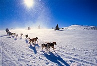 Ski resort of Port Aine. Pirena. Sled dog race in the Pyrenees going through Spain , Andorra and France. Catalan Pyrenees. Rialp. Pallars Sobira. Llei...