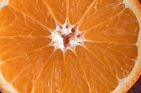 Detail of a Minneola Tangelos cut in half in Oak View, California.