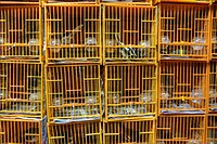 Bird cages in the Hong Kong Bird Market.