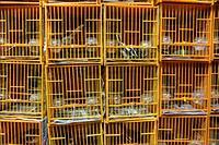 Bird cages in the Hong Kong Bird Market.