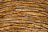 Palm Tree Trunk Close_up