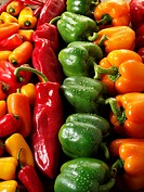 Mixed red, green, yellow & orange fresh bell peppers