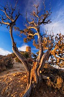 Desert View Watch tower with framed by Juniper tree at sunrise, Grand Canyon national park