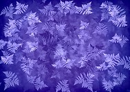 Abstract violet background with motif leaf fern