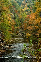 Autumn, Citico Creek, Cherokee National Forest, TN