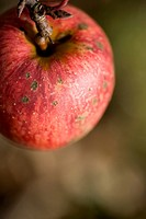 Extreme close up of a red apple