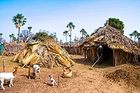 Senegal _ Sin Saloum Region _ Village in the bush Peuls
