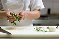 Close up of a chef hands plucking a rosemary twig