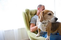 Beagle Dog Standing on Man Lap