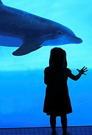 Girl watching bottlenose dolphins - Texas State Aquarium, Corpus Christi, Texas