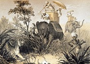 Tiger hunting in India, 19th century. European using a gun to shoot a tiger Panthera tigris while mounted on an Asian elephant Elephas maximus. The sk...