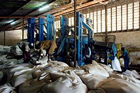 Fairtrade corn production. Factory workers grinding corn and loading it into sacks at the CDI_Bwamanda project. This project is designed to help small...
