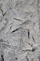 Prehistoric bird prints. These 1.5 million year old bird prints were found near Ileret, Kenya. They were found alongside footprints that belonged to H...