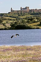 VILLAGE OF MOURA, STORK FLYING BY A LAKE, ALENTEJO, PORTUGAL