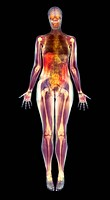 Thin woman, coloured magnetic resonance MRI scan. This image is a multi_slice MRI scan where mean channel values were used for non_transparent pixels ...