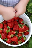 Little girl holding bucket full of strawberries