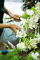 Arranging flowers (thumbnail)