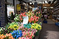 Flowermarket along the Singel, Amsterdam, Netherlands