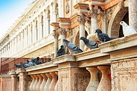 Pigeons on St  Mark's Square Archeological Museum
