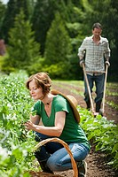 Woman picking vegetables and man using cultivator in field
