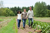 Three people looking at vegetable crop on farm