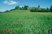 Italy, Tuscany, Orcia Valley, landscape ...