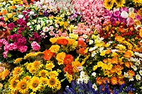 flowers, flowers market, Ventimiglia, Liguria, Italy