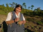 BOLIVIA Cultivating estevia which is a natural sweetener, good for diabetes, in Santa Fe, Caranavi