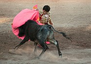 The 9 year old child matador RAFITA MIRABAL fights a bull in the Plaza de Toros _ SAN MIGUEL DE ALLENDE, MEXICO