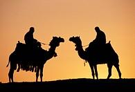 Egypt, camels