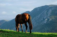 Horse grazing along the mountains of Asturias Llanes Posada Cuera