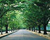 Trees lined at side of a road