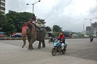 Elephant with Mahut on the eastern express highway near Mulund , Bombay Mumbai , India , NO MR