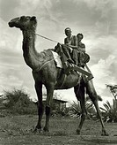 Africa, Tanzania, masai men on dromedary