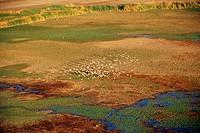 Africa, Kenya, Lake Natron