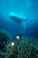 Italy, Sicily, Ustica island, scuba diver and posidonias