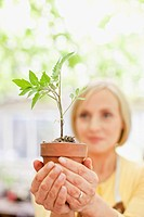 Woman holding seedling in ceramic flower pot