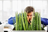 Curious businessman peering from behind plant in office